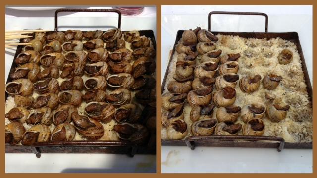 Caracoles. Snails. Schnecken.