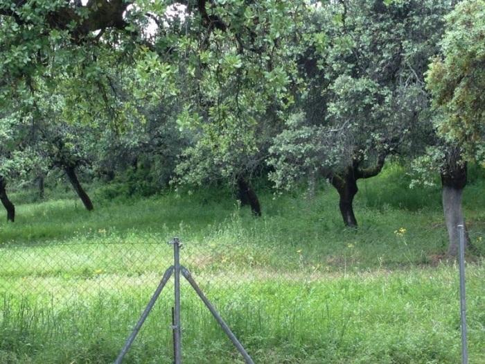 Tumbalobos está en pleno campo. El sitio no puede ser más tranquilo.